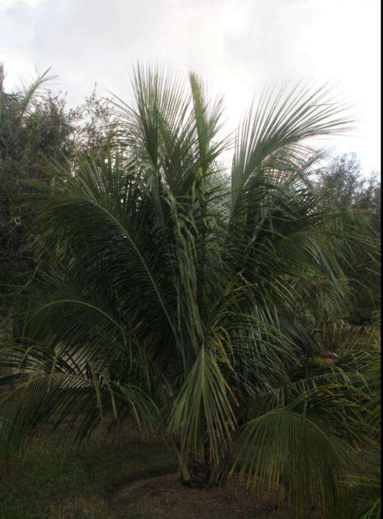 alfrediiN1.PNG
