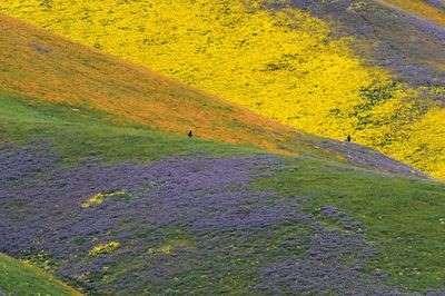 58ee92326707f_mowildflowers.jpg.cfbede5d