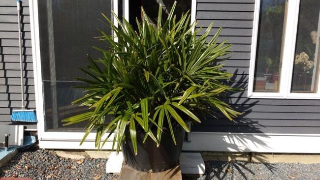 Palm#3.jpg