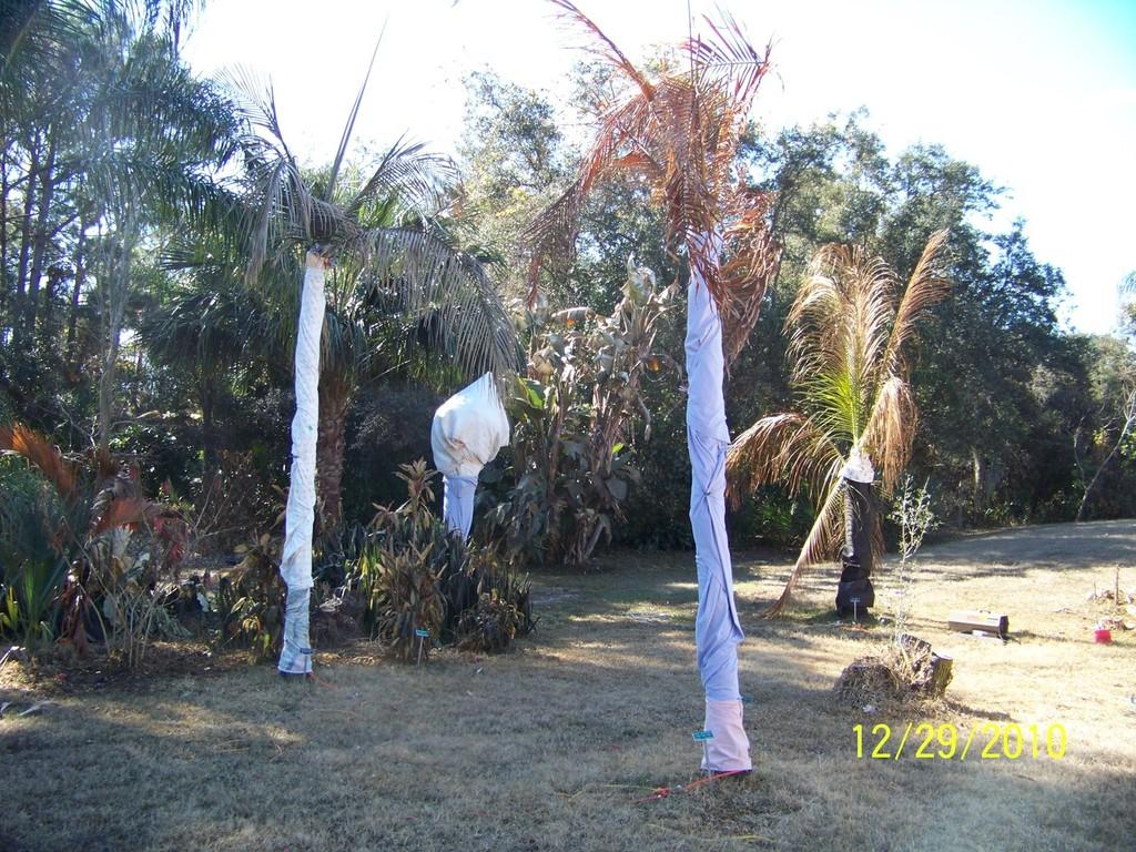Wrapped palms.jpg