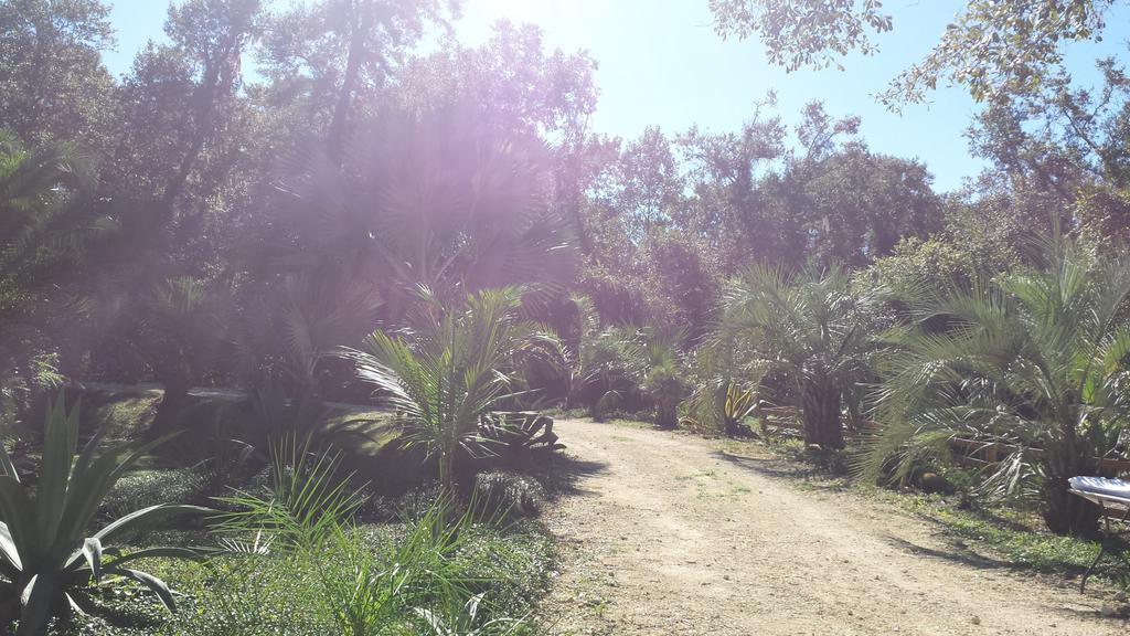 0005_Path_Around_Pond_1600.jpg