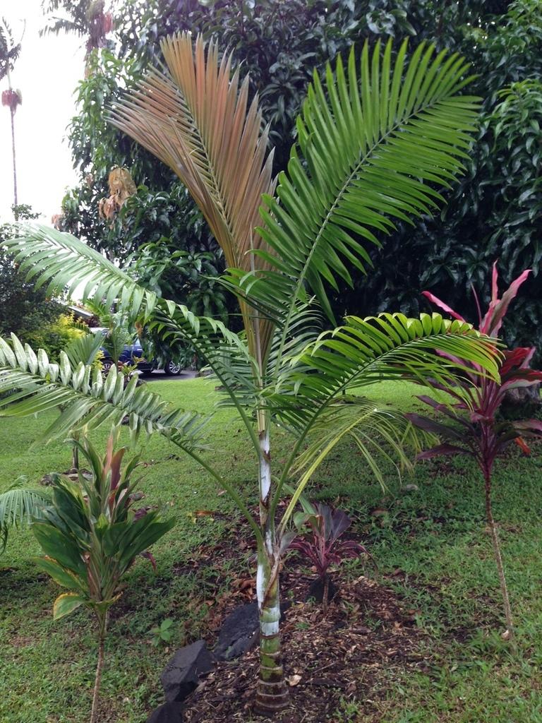 IMG_1351.thumb.JPG.8309b06b94ceaed80f455