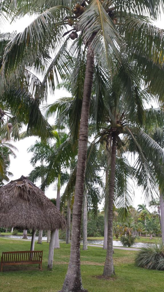 20181226_141341_CoconutsTiki_1600.jpg