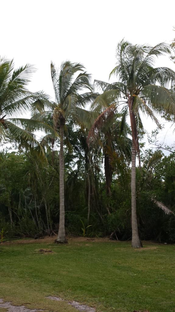 20181226_141553_Coconut_Pair_1600.jpg