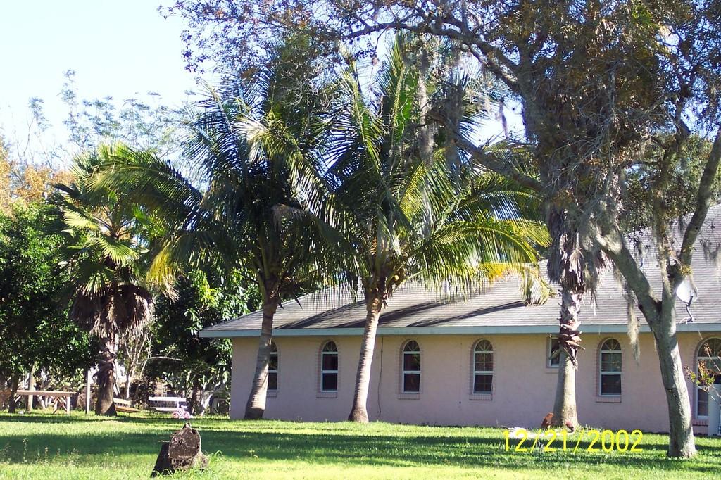Lake Pearle Dr. coconut palms 2002.JPG