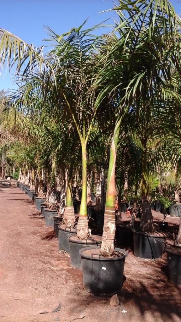 bigger palm.jpg