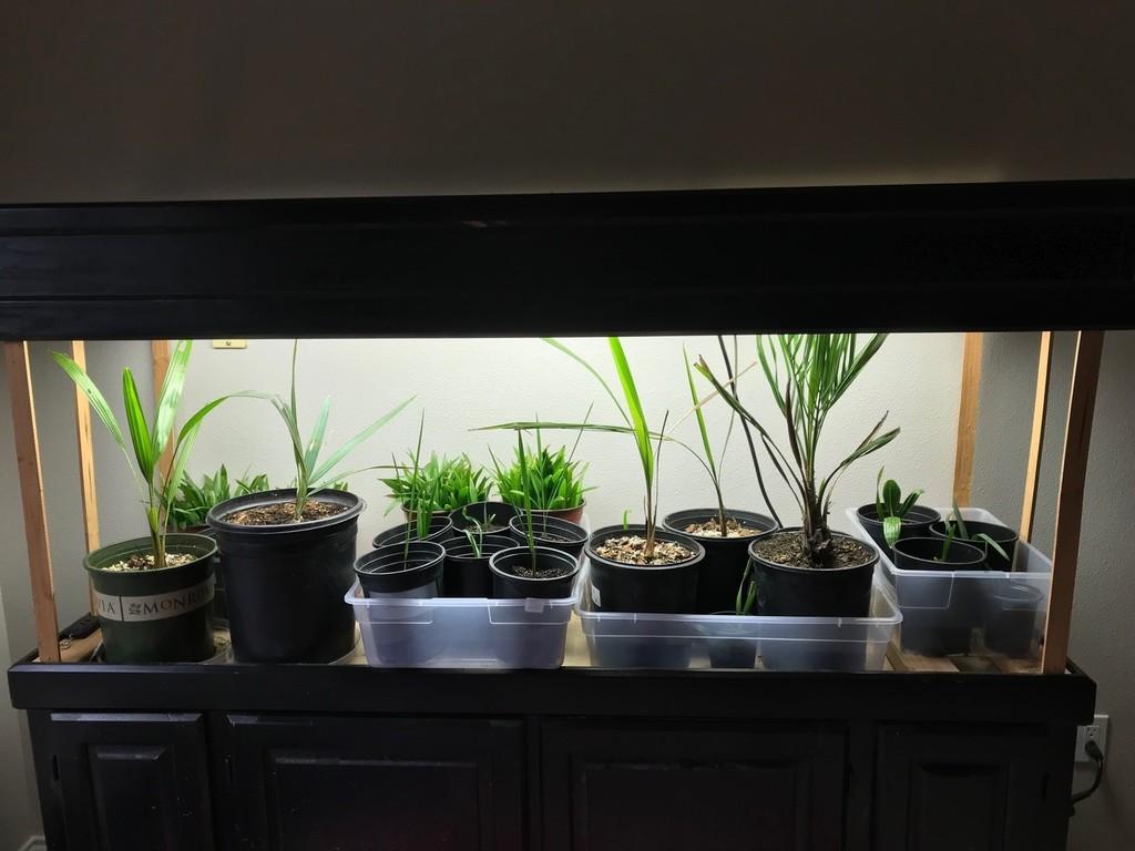Seedlings 2.jpg