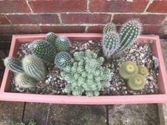 Cacti planter.jpg