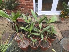 Filibusta seedlings.jpg