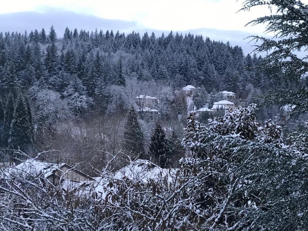 Snow 1.jpg