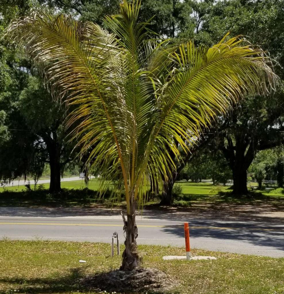 Hindu Center coconut 041819.jpg