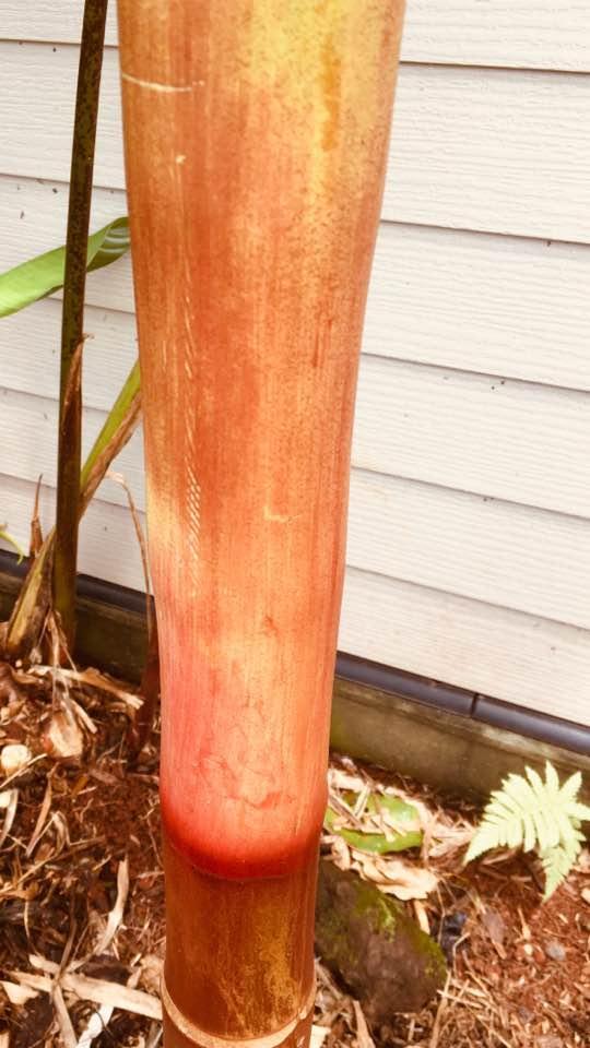 red palm 8.jpg