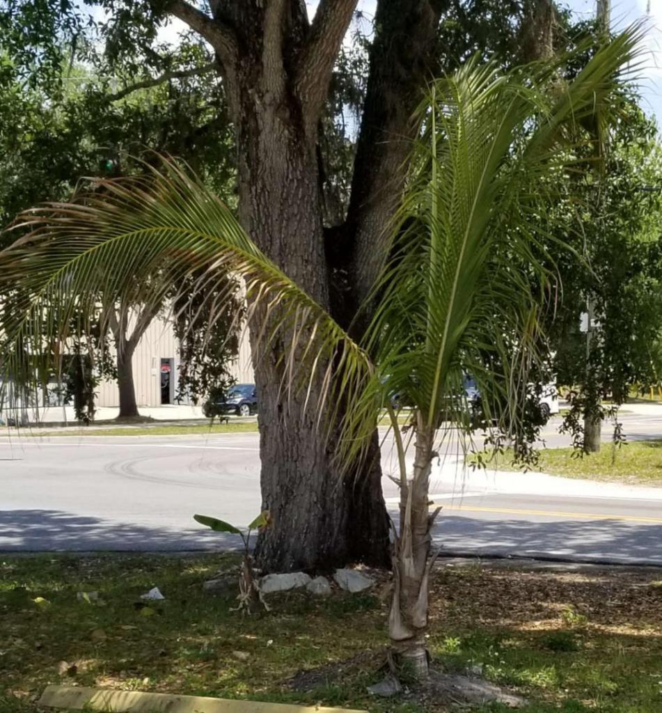 Hindu Center coconut 041819 2.jpg