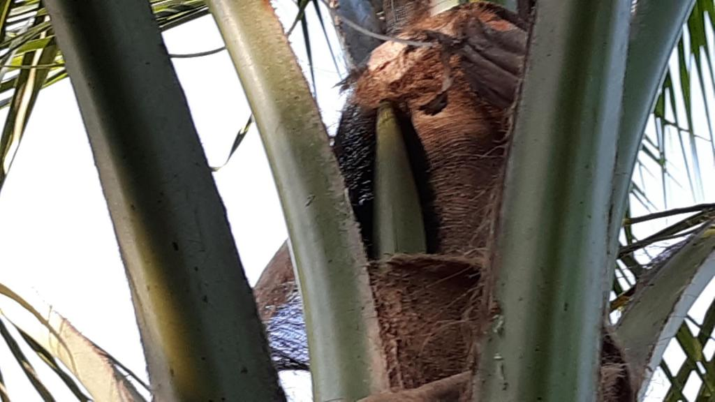 Coconut spathe 2.jpg