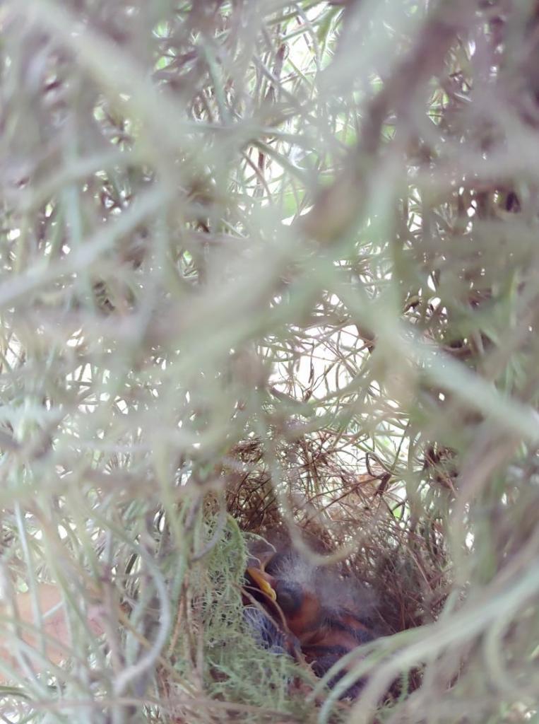 Warblers_dry.jpg