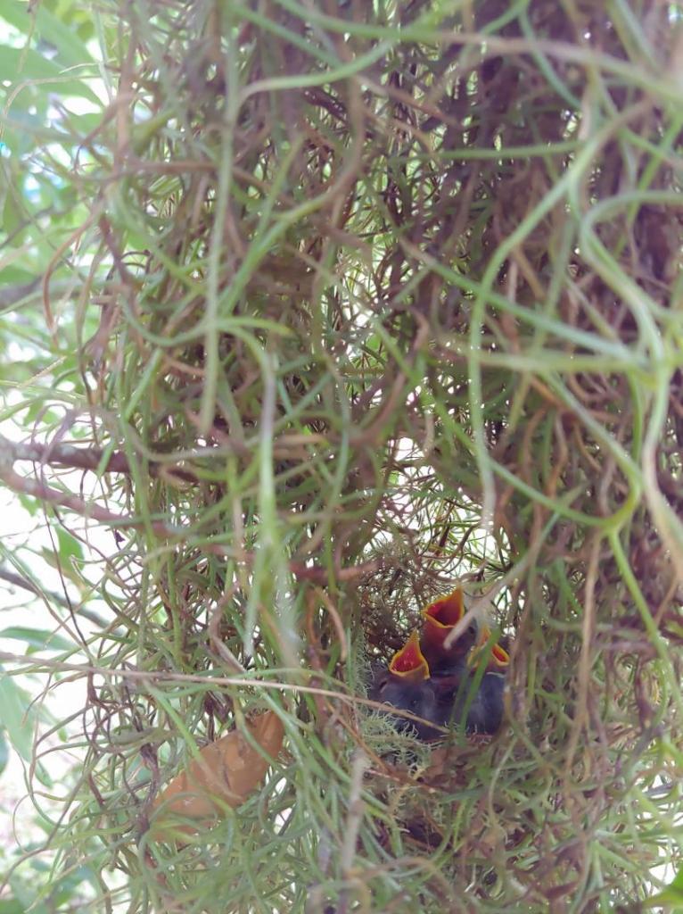 Warblers_rain.jpg