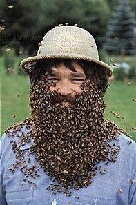 beard.jpg.3c4c1dd0cb9d762628a6b9e617aa287e.jpg