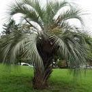 PlantDad