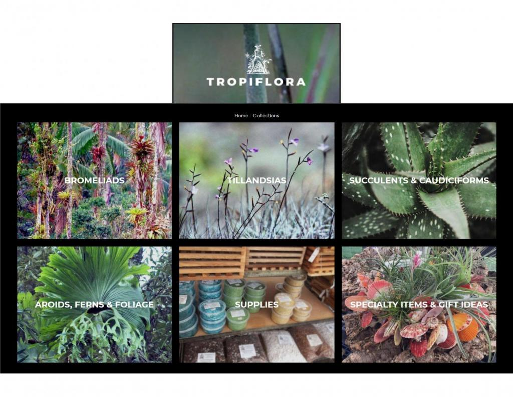 1132215555_TropifloraLogo2.thumb.jpg.b2e99fdd5f8f6918c6efb3038e8cde7b.jpg