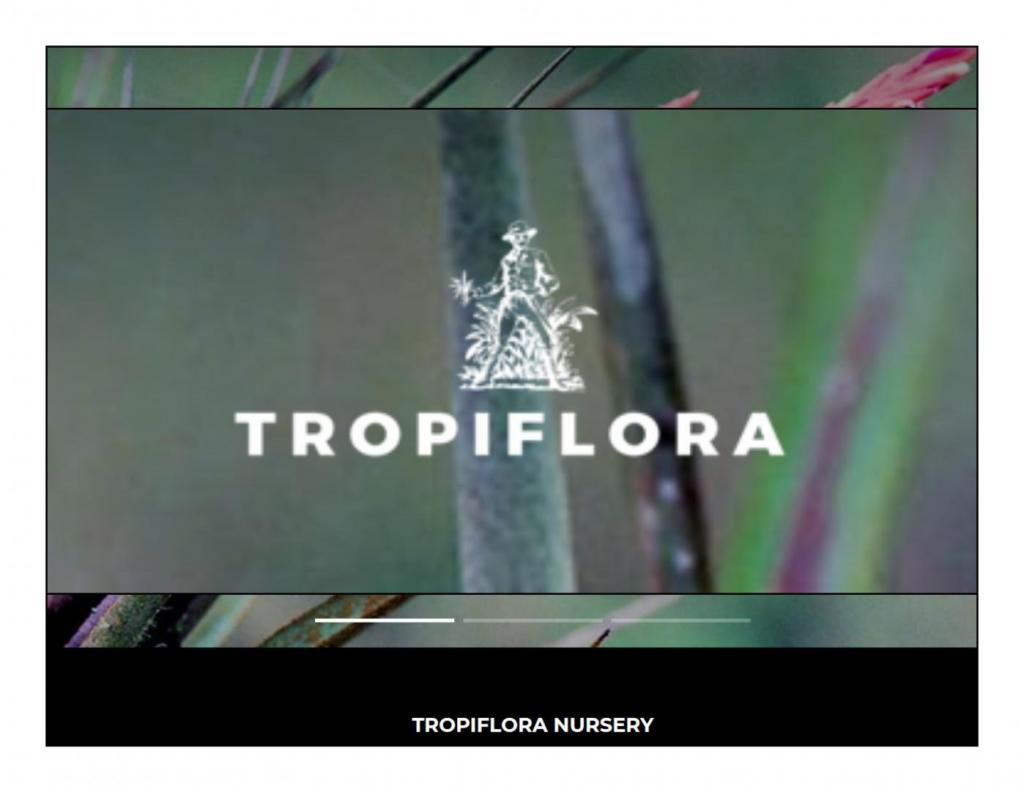 694257094_TropifloraLogo.thumb.jpg.c471d72a5c75ab0b114b927ddc419956.jpg