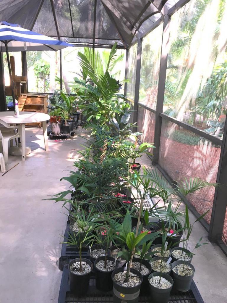 Lanai_Container_Garden_01_09-19-19.thumb.JPG.192c270455723db8f5d40a764c6bc2eb.JPG