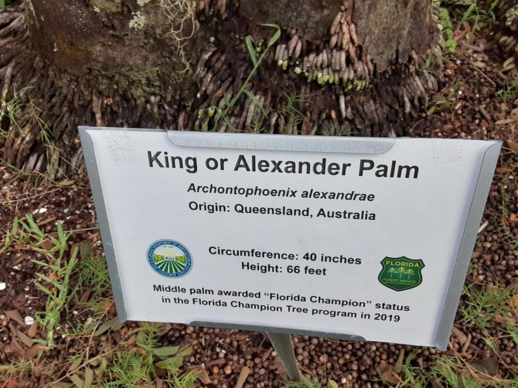 0011_Archontophoenix_alexandrae_tallest_sign.jpg