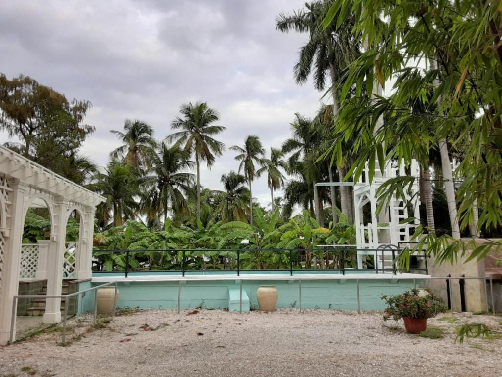 0015_Pool_Bananas_Coconuts.jpg