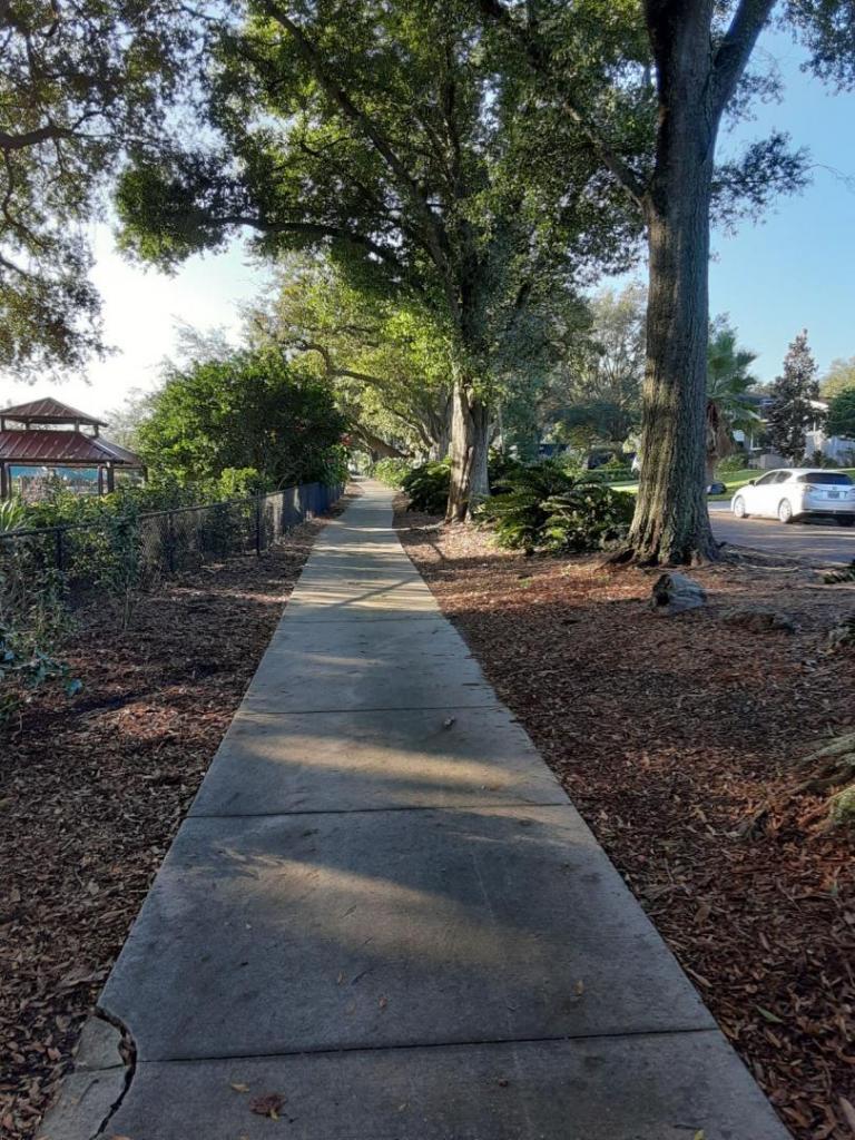 0005_Sidewalk_Cycads_1.jpg