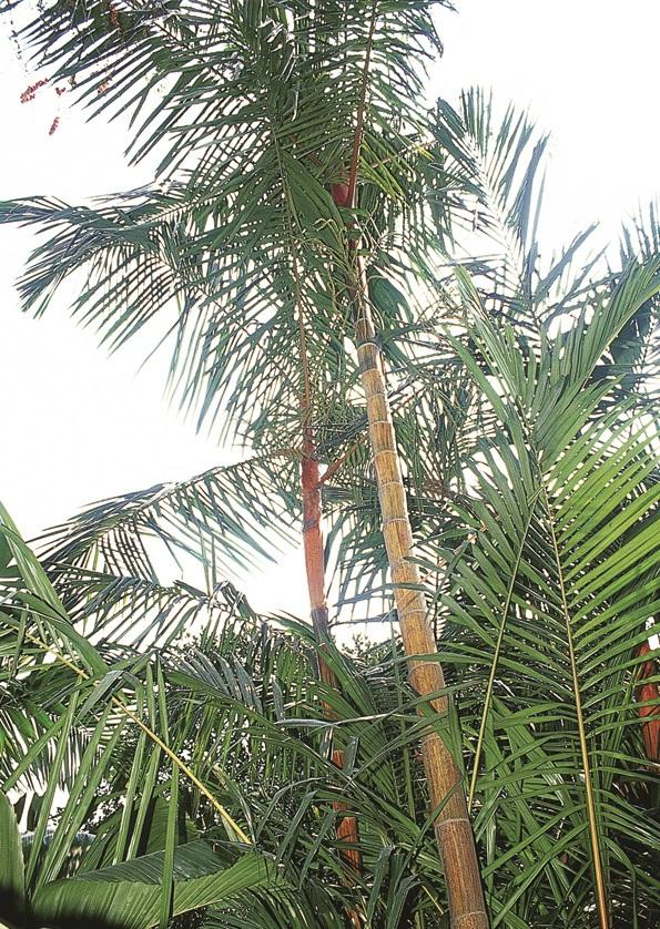 apple-palm.jpg