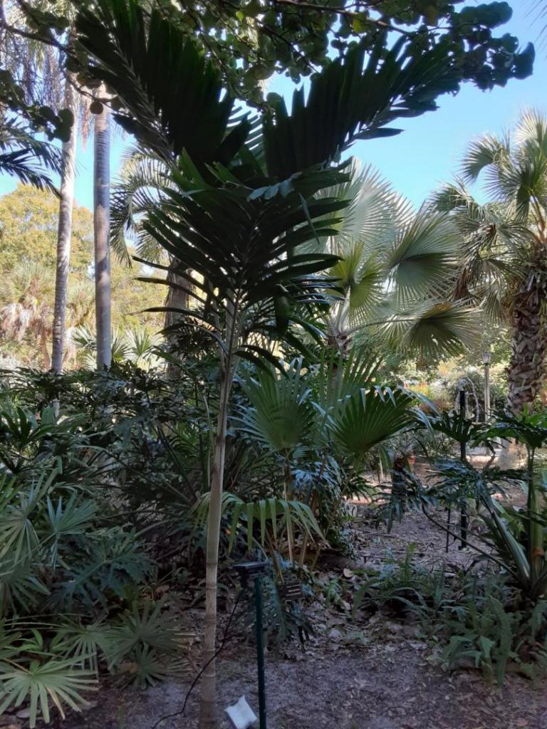 0004_Palm.jpg
