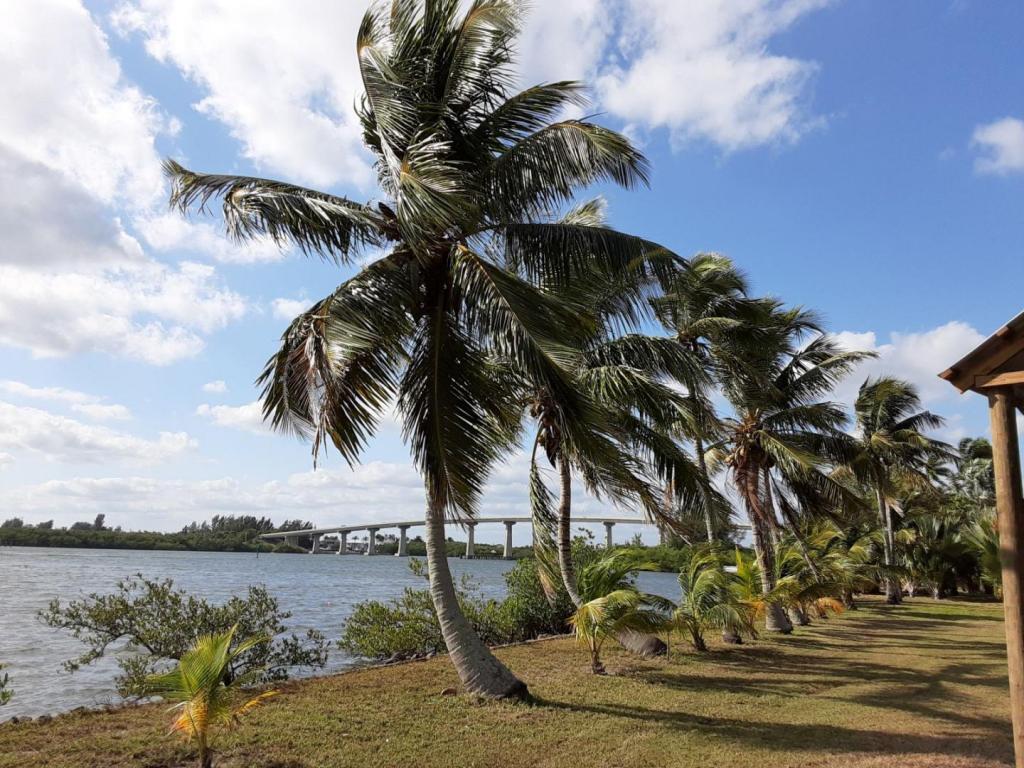 0005_CoconutsBridge_II.jpg