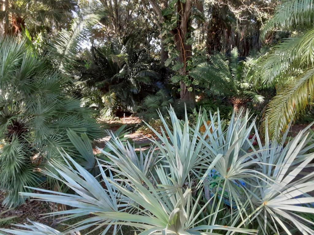 0006_Palm_Cycad_Understory.jpg