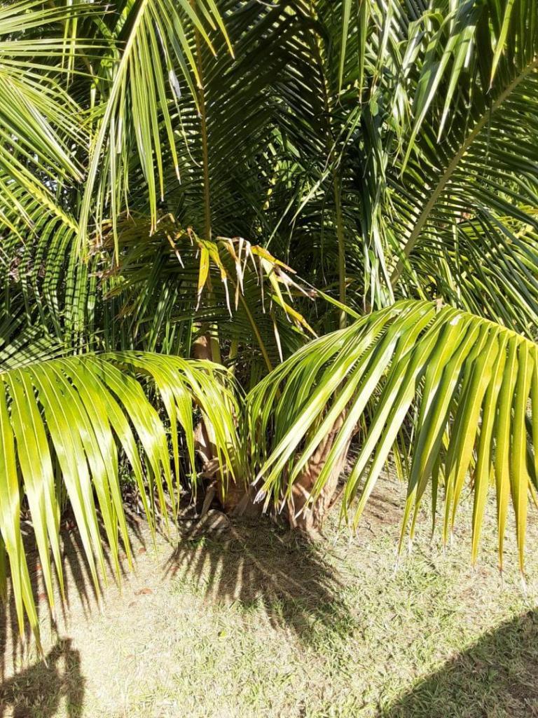 0007_Twin_Coconuts.jpg