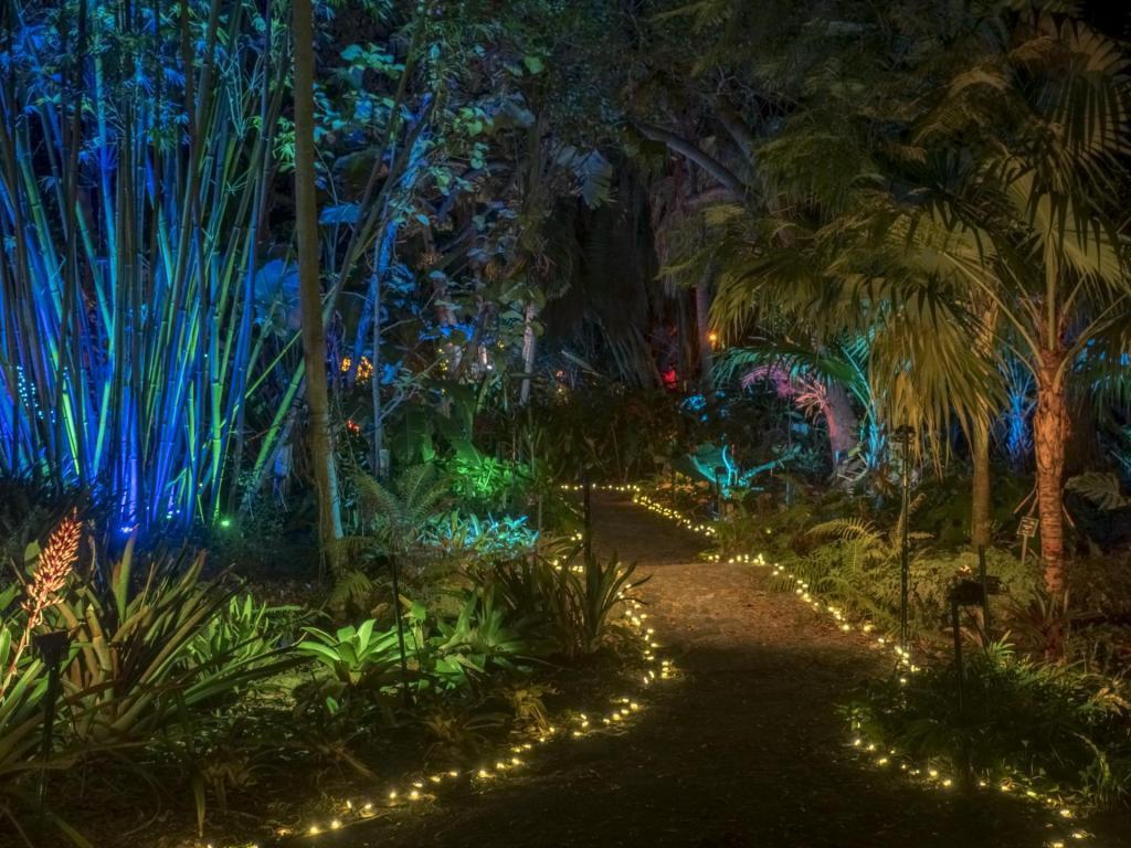 Heathcote Rain Forest 2019 HDR-1.jpg