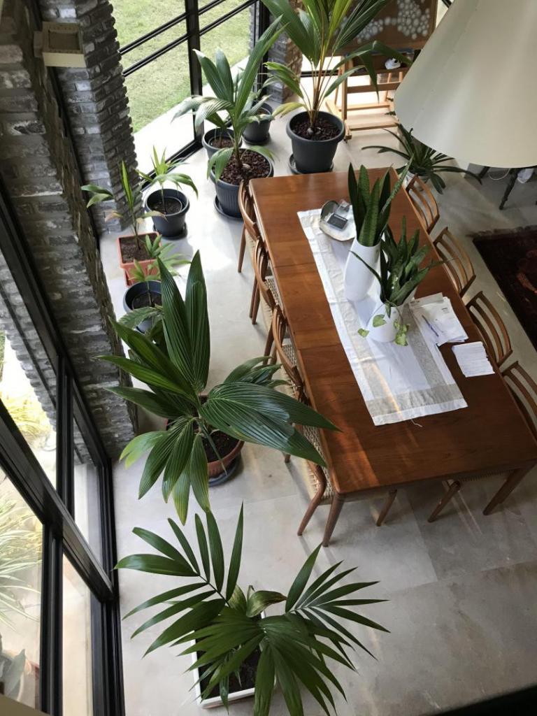 home rainforest.jpg