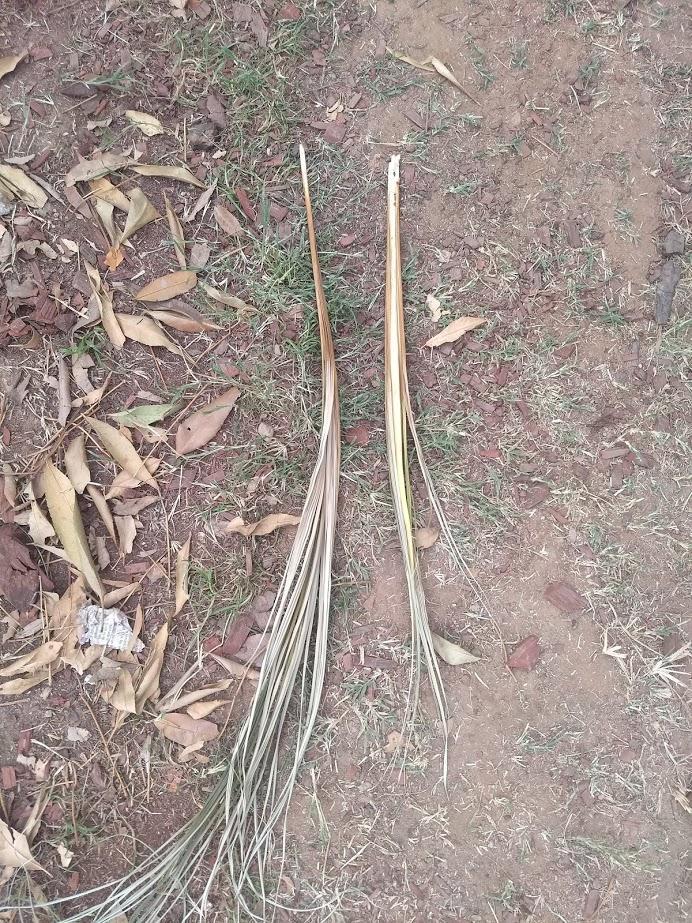 spearpulled.jpg