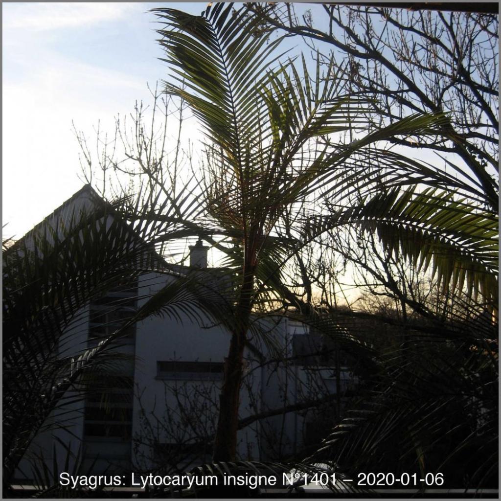 1392857504_N14012020-01-06IMG_9686.thumb.jpg.16f5e5a9936d31fcbaa5308f92b4d805.jpg