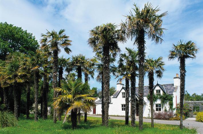 scottish-palms.jpg