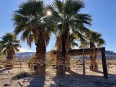 Nevada Filfiferas