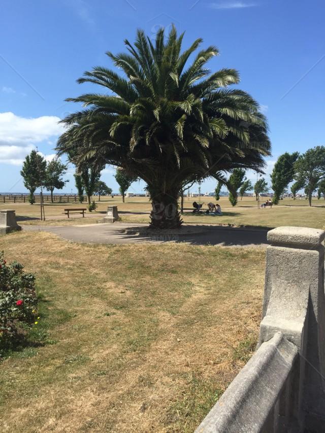 stock-photo-park-summer-relaxing-bright-fresh-trees-scenary-coastal-exotic-cc8d21e6-ba83-4138-8c17-b1673b2a1df2-1.jpg