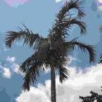 Palms Brisbane