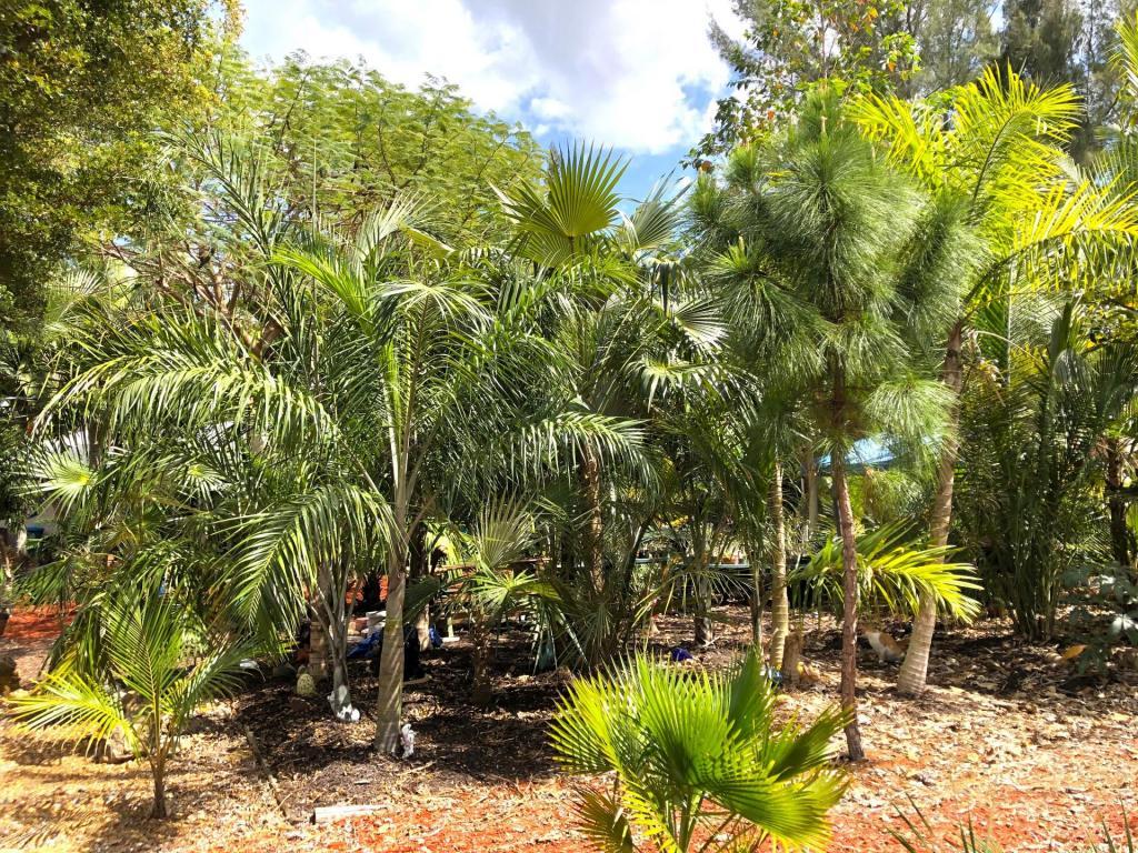 Garden Lot view 02 03-21-20.JPG