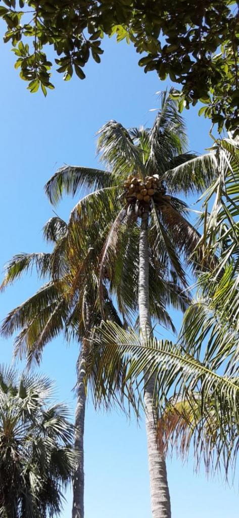 20200307_120106_Golden_Coconuts.jpg