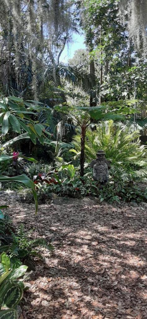 20200307_130052_Jungle.jpg