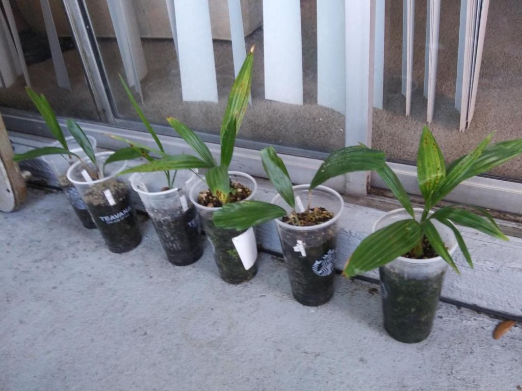 Palms from Kinzyjr 4-20.jpg