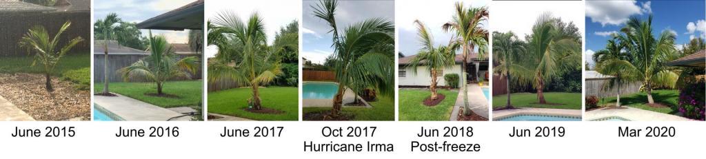 coconut_trends.jpg