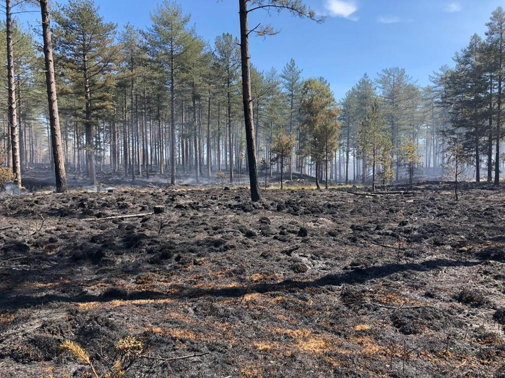 Wareham-Forest-Fire.thumb.jpg.f9b0131295a7d24b0f0ee52bb2629a90.jpg