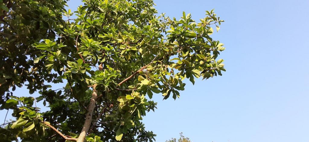 20200612_192558_Avocados.jpg
