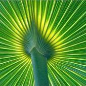 palmsrgreat