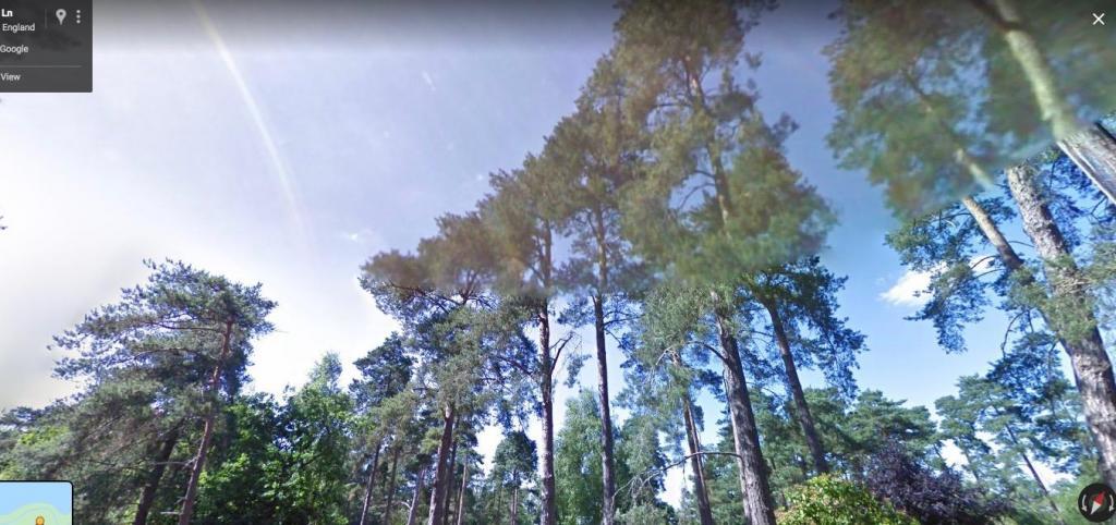 Pines.thumb.jpg.6684b3b2a4d6983fddee0603c8e50ade.jpg